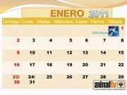 calendario 2011 de animal tv