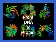 13 protein synthesis and mutations