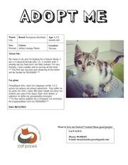 adoptionlisting lily