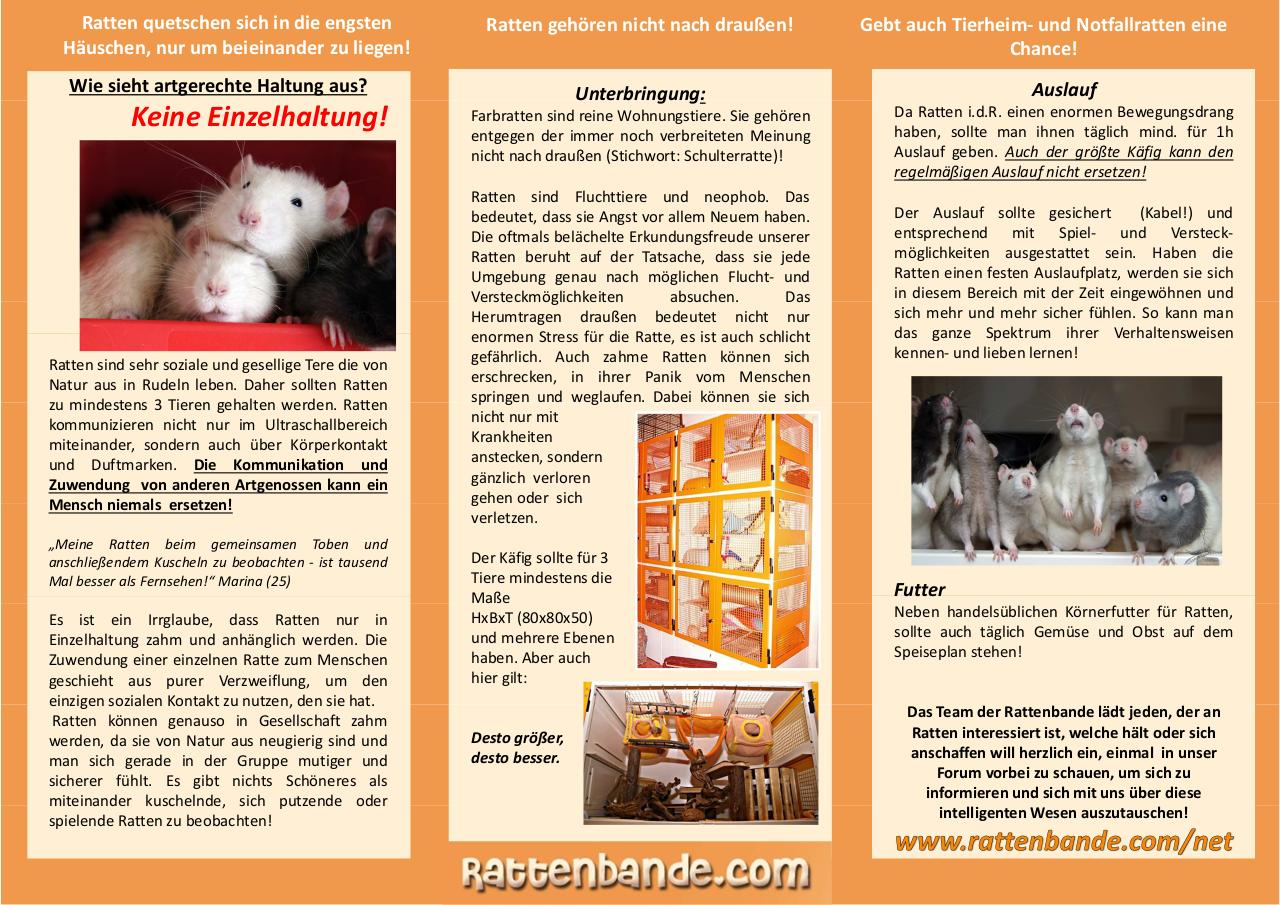 Flyer_Version_Orange.pdf - page 2/2
