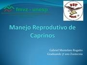 apresentac o manejo reprodutivo caprinos