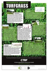 turf benefits