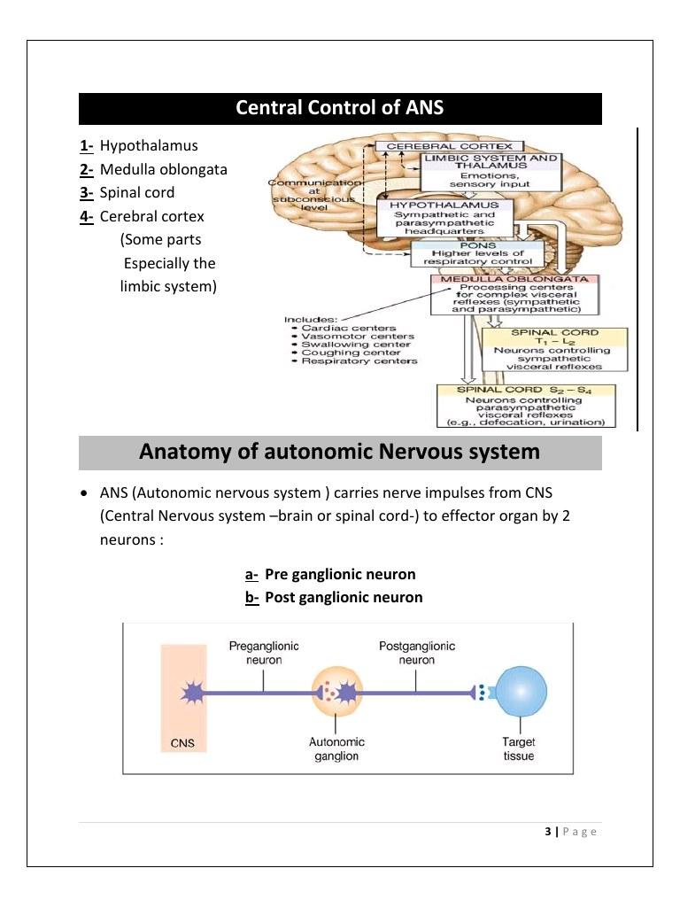 neuron physiology pdf