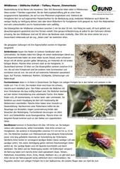wildbienen einf hrung